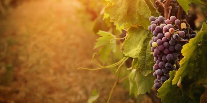 Faithfulness v. Fruitfulness